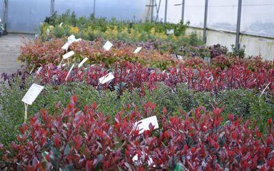 Vanderlinden & Vangilbergen Plantencentrum - Plantencentrum