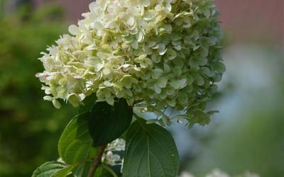 Vanderlinden & Vangilbergen Plantencentrum - Sierplanten